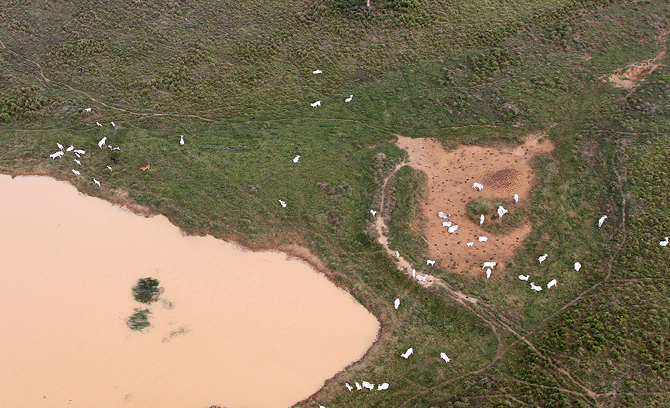 Aerial view of cattle near a body of water in Lindoeste, Brazil